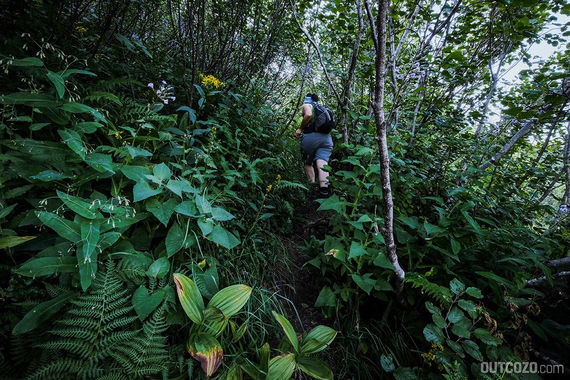 Dschungel am Furkajoch