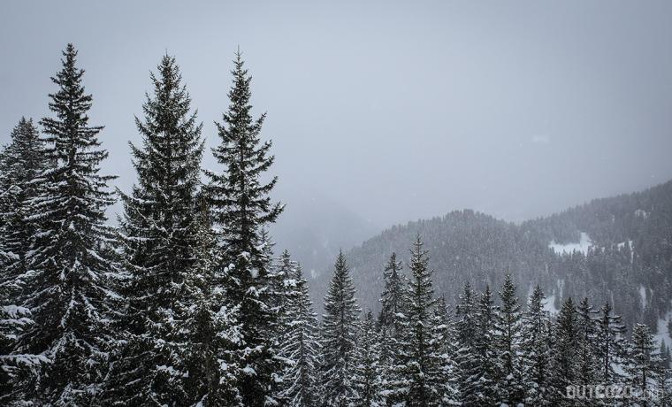 nebel und schneefall im wald
