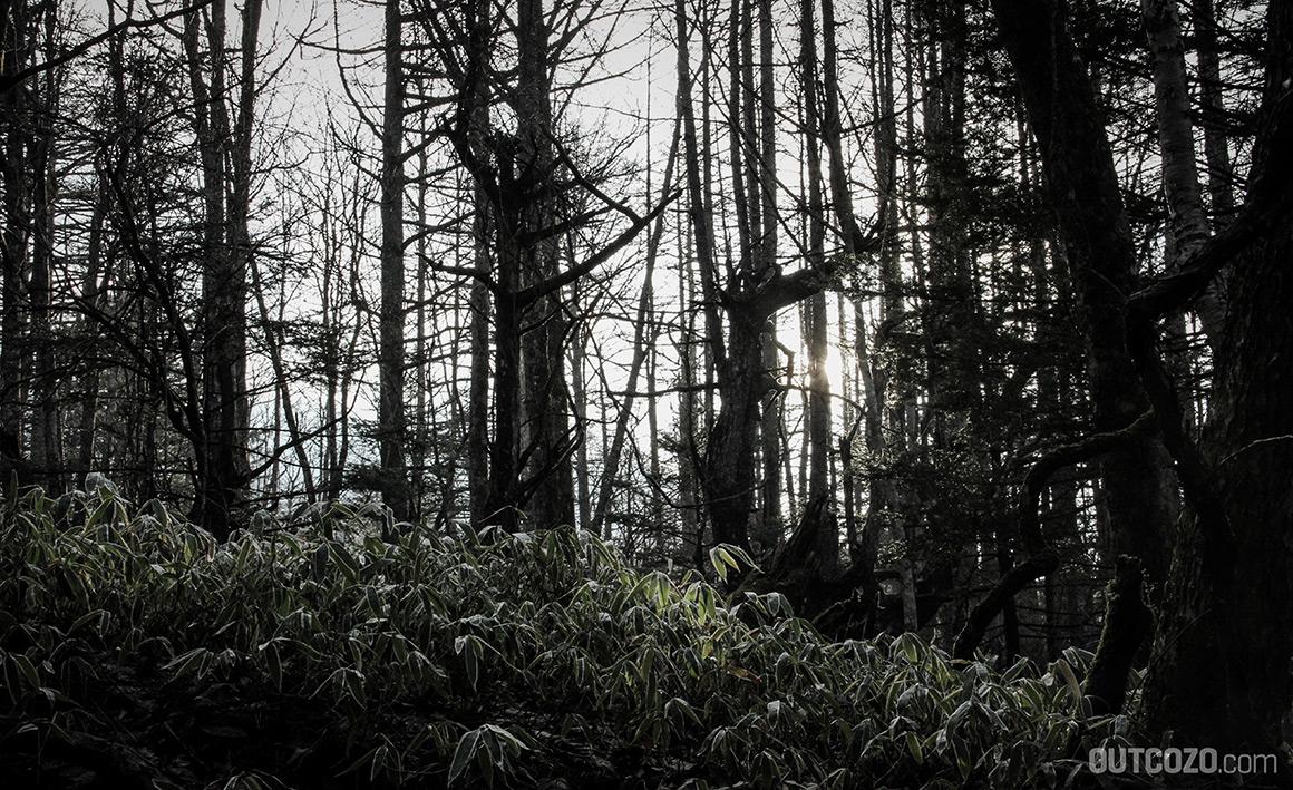 fuji mystischer wald