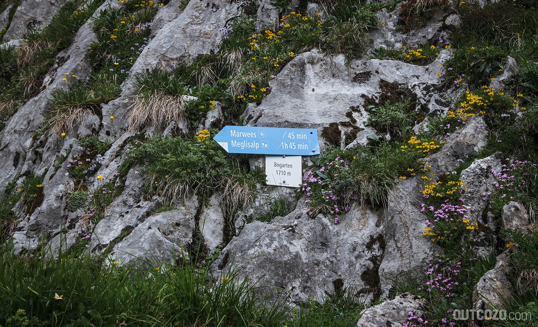 Wegbeschreibung Marwees inmitten schöner Alpenblumen