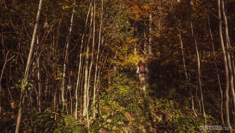 Dichter Wald auf dem Weg zum Hohen Kasten